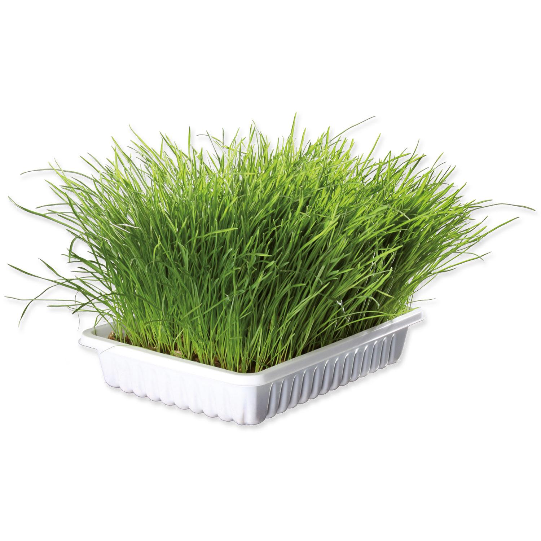 Miska TRIXIE s trávou pro kočky